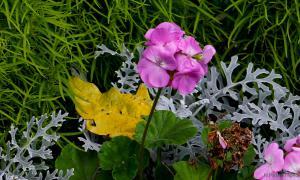 Осень. Ботанический сад, botsad-003