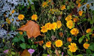 Осень. Ботанический сад, botsad-004
