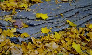 Осень. Ботанический сад, botsad-005