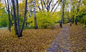 Осень. Ботанический сад, botsad-006