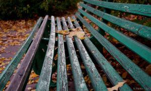 Осень. Ботанический сад, botsad-008