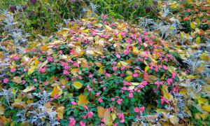 Осень. Ботанический сад, botsad-009