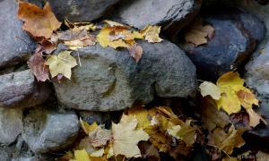 Осень. Ботанический сад, botsad-011
