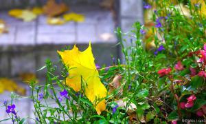 Осень. Ботанический сад, botsad-015