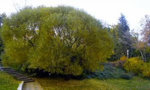 Осень. Ботанический сад, botsad-017