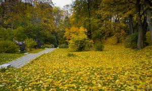Осень. Ботанический сад, botsad-018