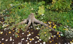 Осень. Ботанический сад, botsad-019
