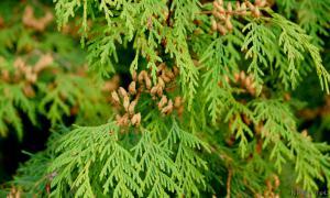 Осень. Ботанический сад, botsad-020