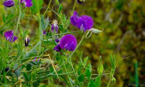 Осень. Ботанический сад, botsad-021