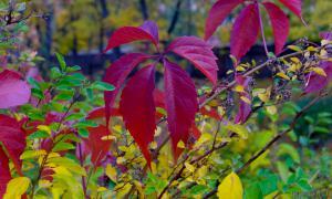 Осень. Ботанический сад, botsad-043