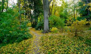 Осень. Ботанический сад, botsad-044