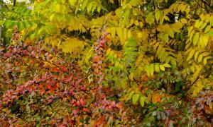 Осень. Ботанический сад, botsad-046