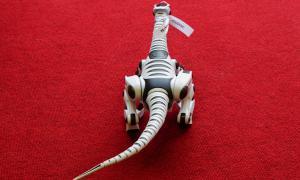 Региональный этап Всемирной Олимпиады роботов, roboty-008