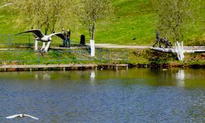 Весна. У пруда, prud_vesna-002