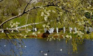 Весна. У пруда, prud_vesna-005