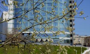 Весна. У пруда, prud_vesna-006