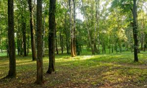 Прогулка по парку Кирова, Park_2018-08-12-007