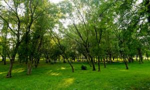 Прогулка по парку Кирова, Park_2018-08-12-011