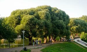 Прогулка по парку Кирова, Park_2018-08-12-024