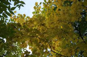 """Осень. Парк """"Дружба"""", 0016"""