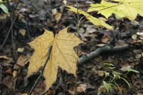 """Осень. Парк """"Дружба"""", 0017"""
