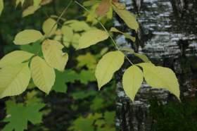 """Осень. Парк """"Дружба"""", 0021"""