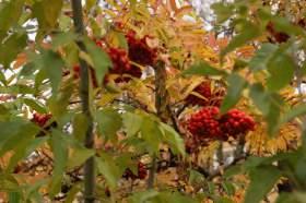 Осенняя зарисовка, osen011