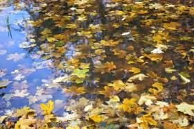 Осенняя зарисовка, osen014