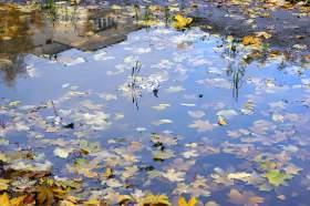Осенняя зарисовка, osen015