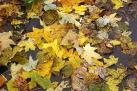 Осенняя зарисовка, osen016