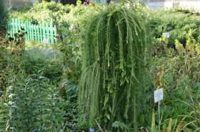 Ботанический сад. Часть 2, 0019