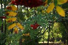 Ботанический сад. Часть 1, 0014