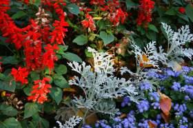 Ботанический сад. Часть 1, 0018