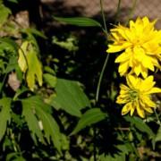 Цветы во дворе моего дома