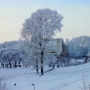 Вятка. Зима. Пруд у цирка