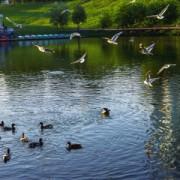 Немного фото у пруда у Диорамы