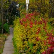 Фотопрогулка по Ботаническому саду